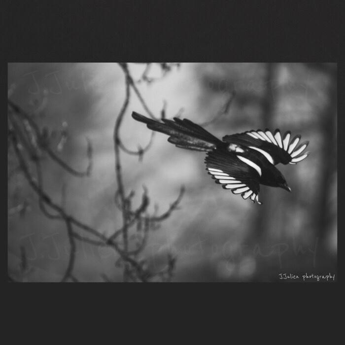 photographie monochrome oiseau qui vole
