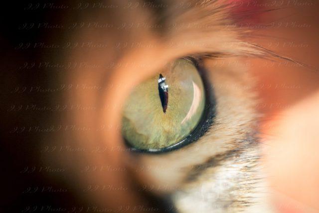 Oeil de chat – Macro photographie