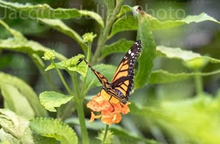 Orange butterfly on flower – Stock Photo