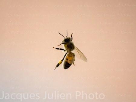 Bee isolated – Stock Photo