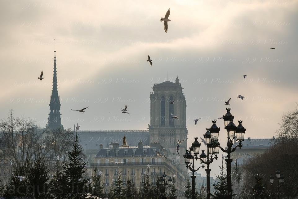 photographie art notre-dame de Paris