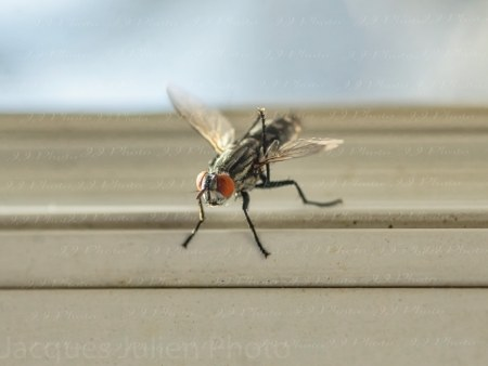 Macro on a fly – Stock Picture
