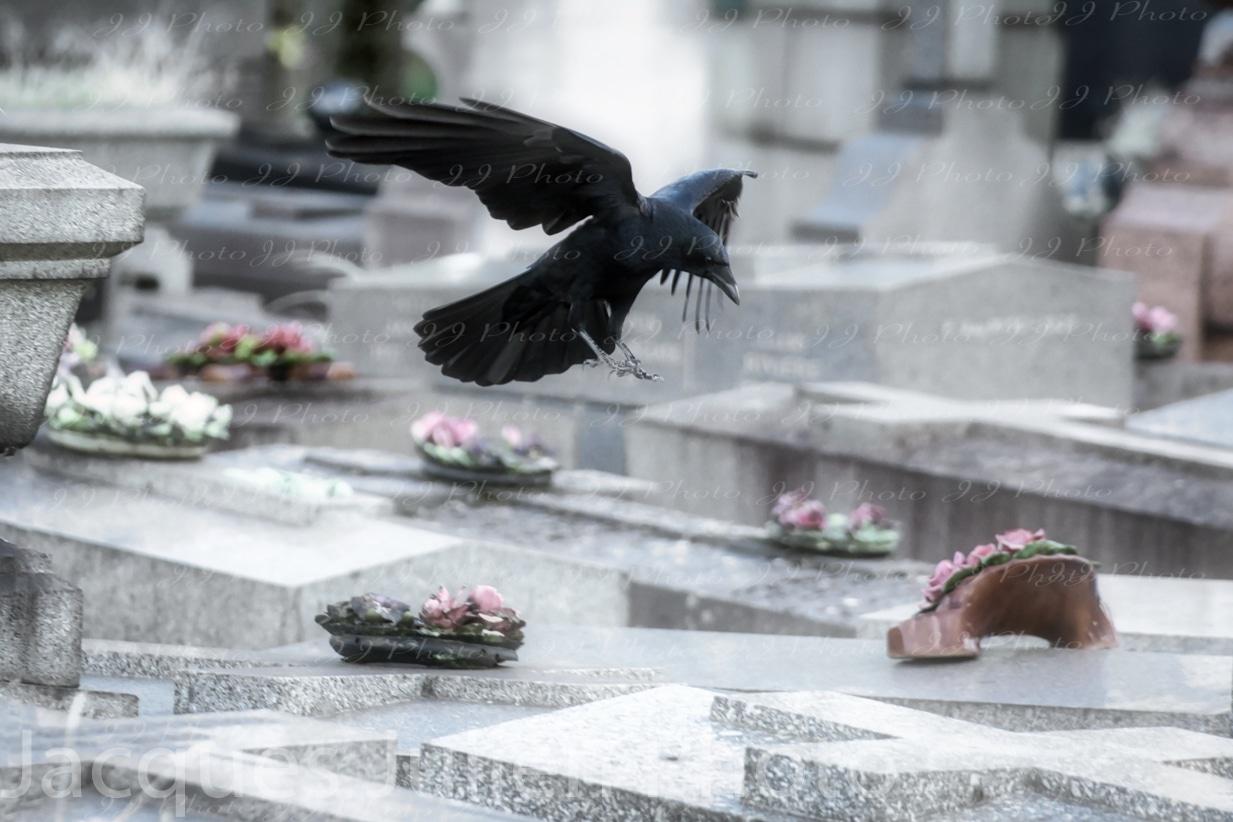 photographie cimetière oiseau