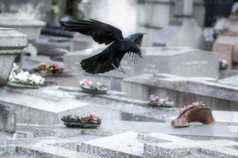 Crow flying on graves – Stock Photo