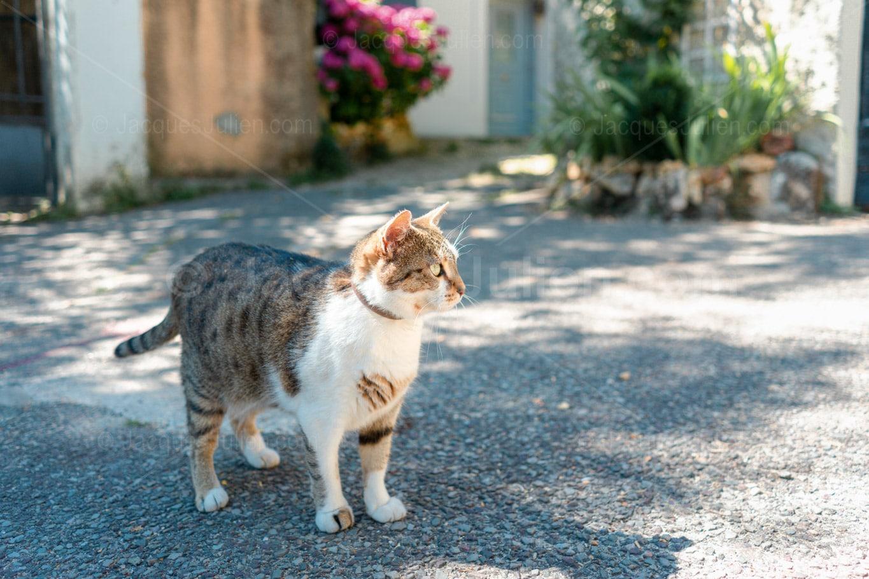 Free royalty Cat Images Jacques Julien