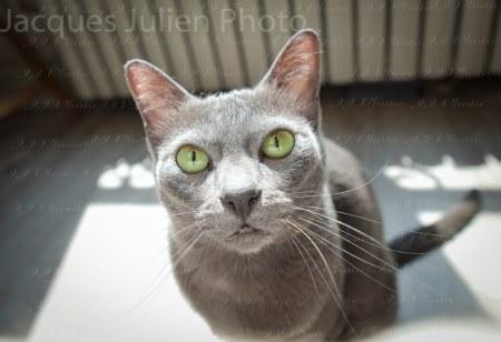 Cute Grey Kitten Photography
