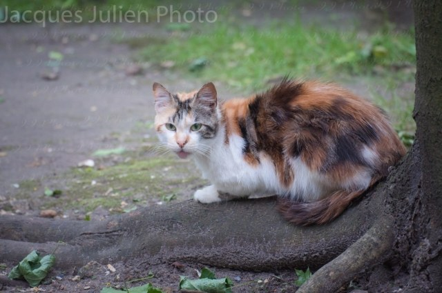 Chat errant sur un arbre – Photo libre de droits