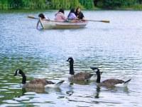 goose lack stock photo  1 - Home