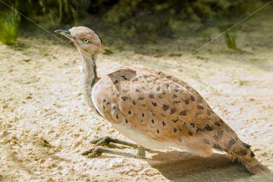 big rare bird image