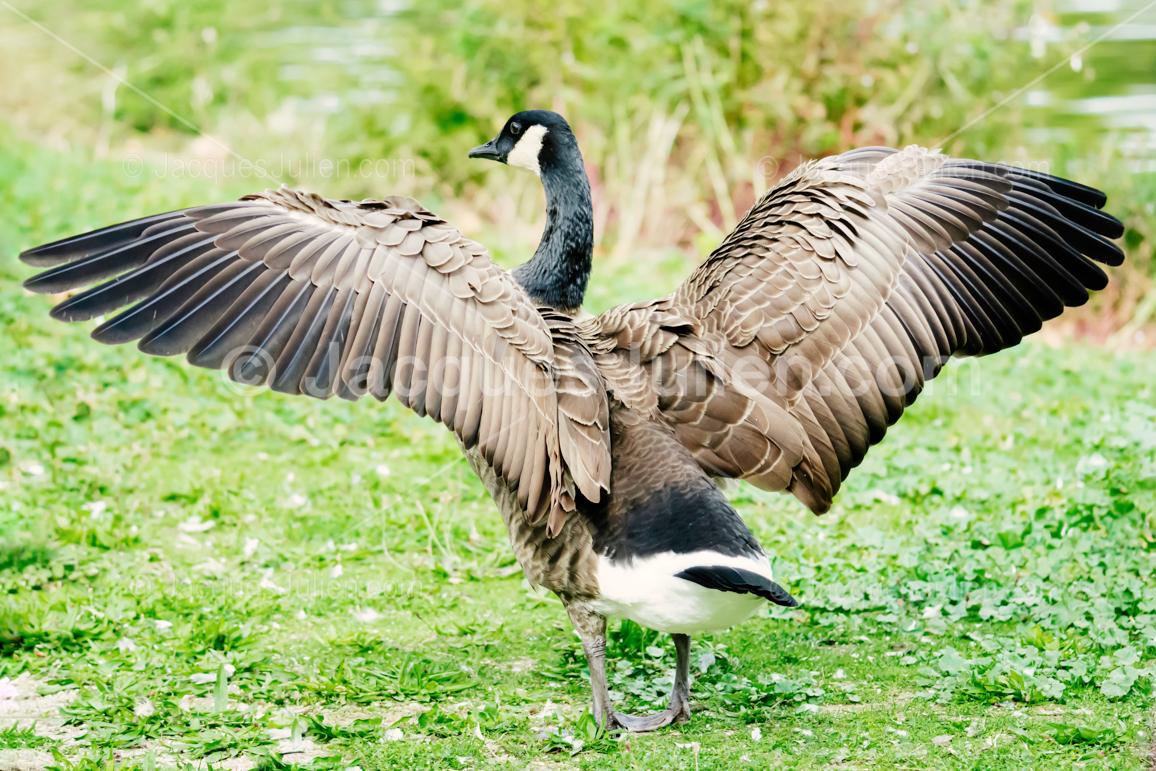 grand oiseau aux ailes ouvertes