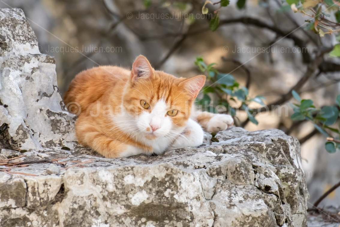 orange cute kitty on a rock