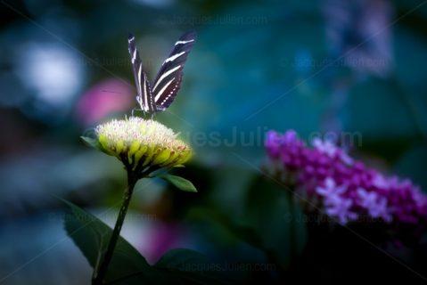 Butterfly on phosphorescent flower