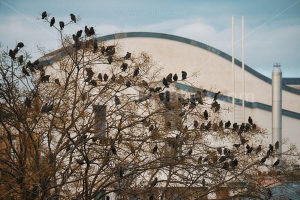 grand groupe d'étourneaux perchés sur un arbre