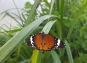 Visiting the butterfly farm at MacBanana