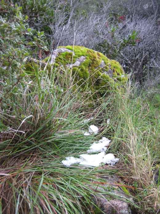 snow-little-patch