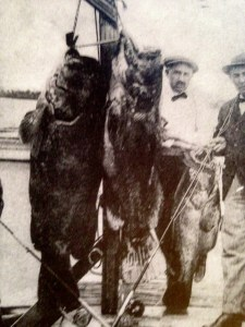 """Goliath Grouper"" called ""Jew Fish"" at the time, Stuart. ca. 1920s. (Thurlow Collection)"
