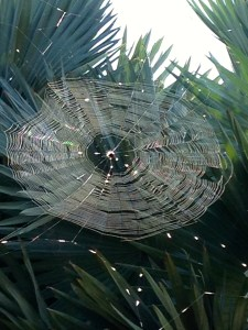 Web in our yard...