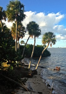 Indian River Side Park along the Indian River Lagoon. (Photo JTL)