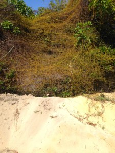 The sand and native shrubs towards at the west side of the property.