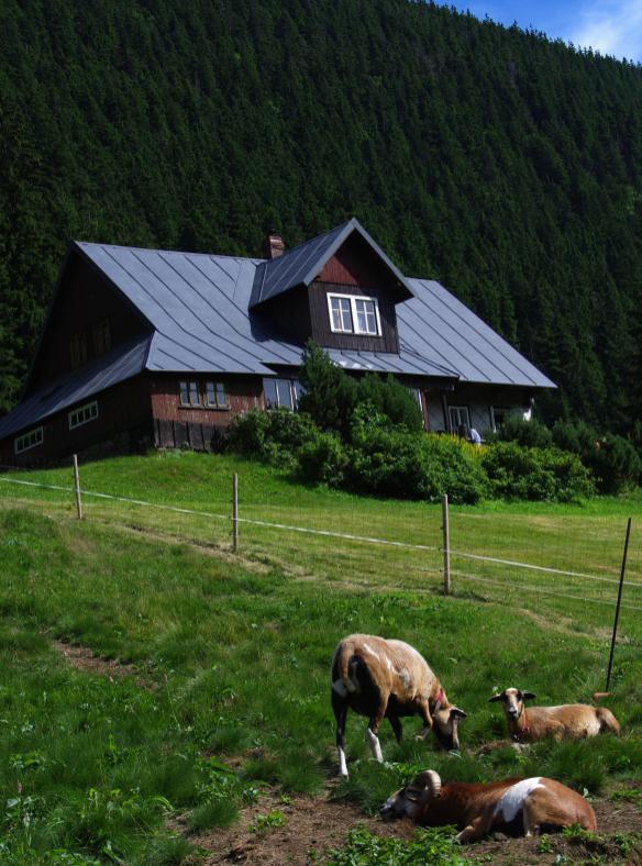 """W Karkonoszach, zwłaszcza po czeskiej stronie, domy położone w górach określa się mianem """"bouda"""" czyli """"buda"""". Ta nazwa ma długoletnią tradycję. Po raz pierwszy została użyta w 1609 roku przez cesarskiego urzędnika dla opisania chałup mieszkańców Karkonoszy."""