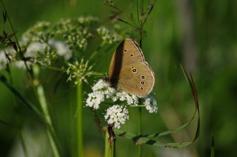 Łąka motyli