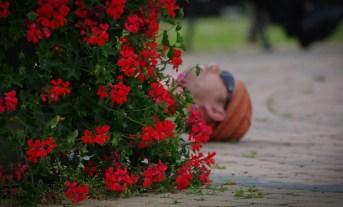 Kwiaty dla wszystkich