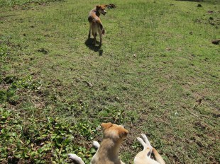 My hippo protection--a couple of dogs I befriended.