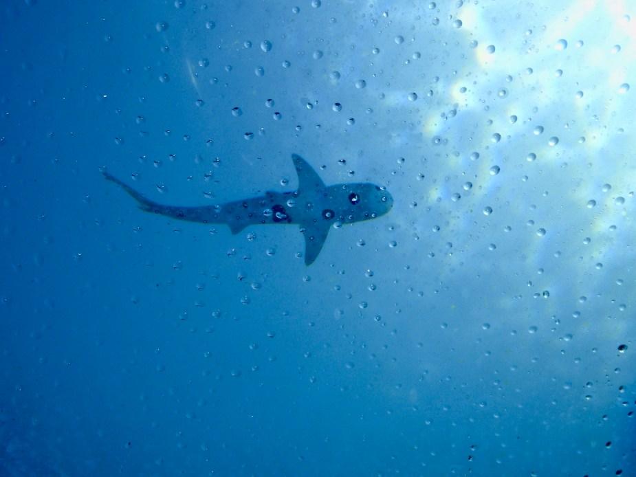 Dubai Aquarium and water theme park, Atlantis Hotel Dubai, Atlantis, Palms Dubai, DXB, shark