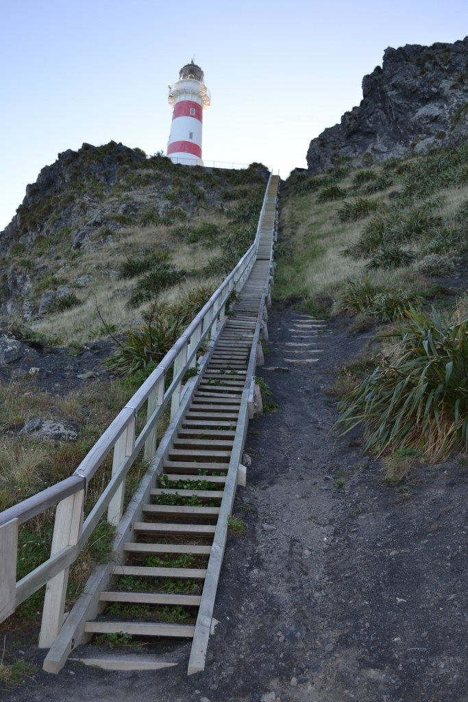 Steps to Cape Palliser Lighthouse