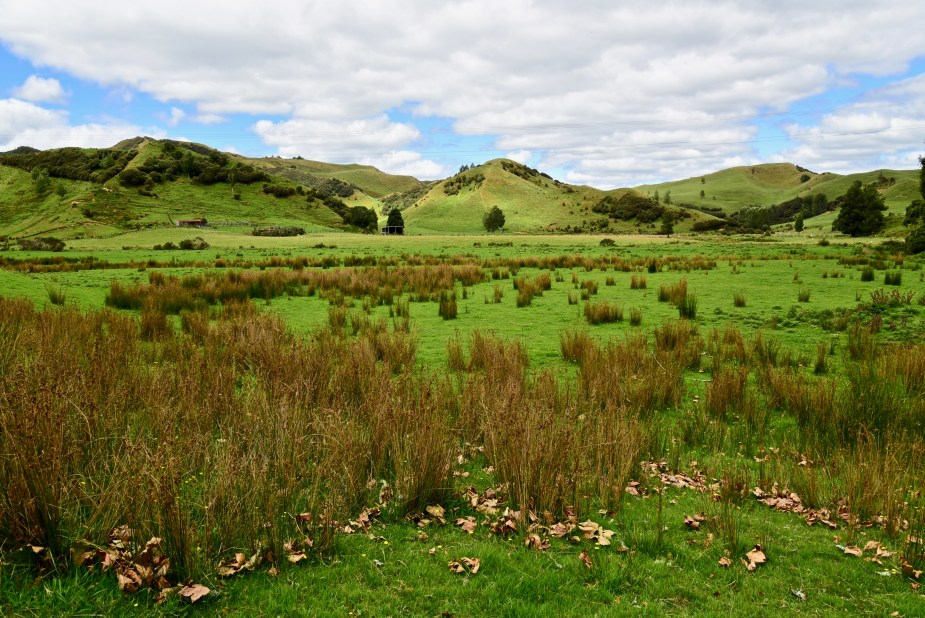 New Zealand sheep, New Zealand farm, New Zealand greenery, move to New Zealand, forgotten world highway, image by Jade Jackson