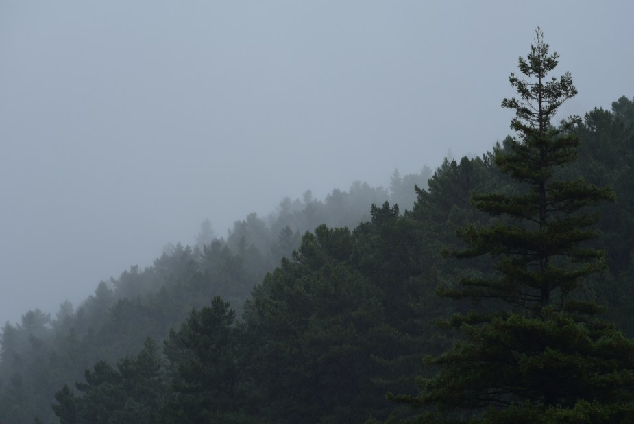 Pinehaven, Wellington, New Zealand, pine trees, forest, image by Jade Jackson