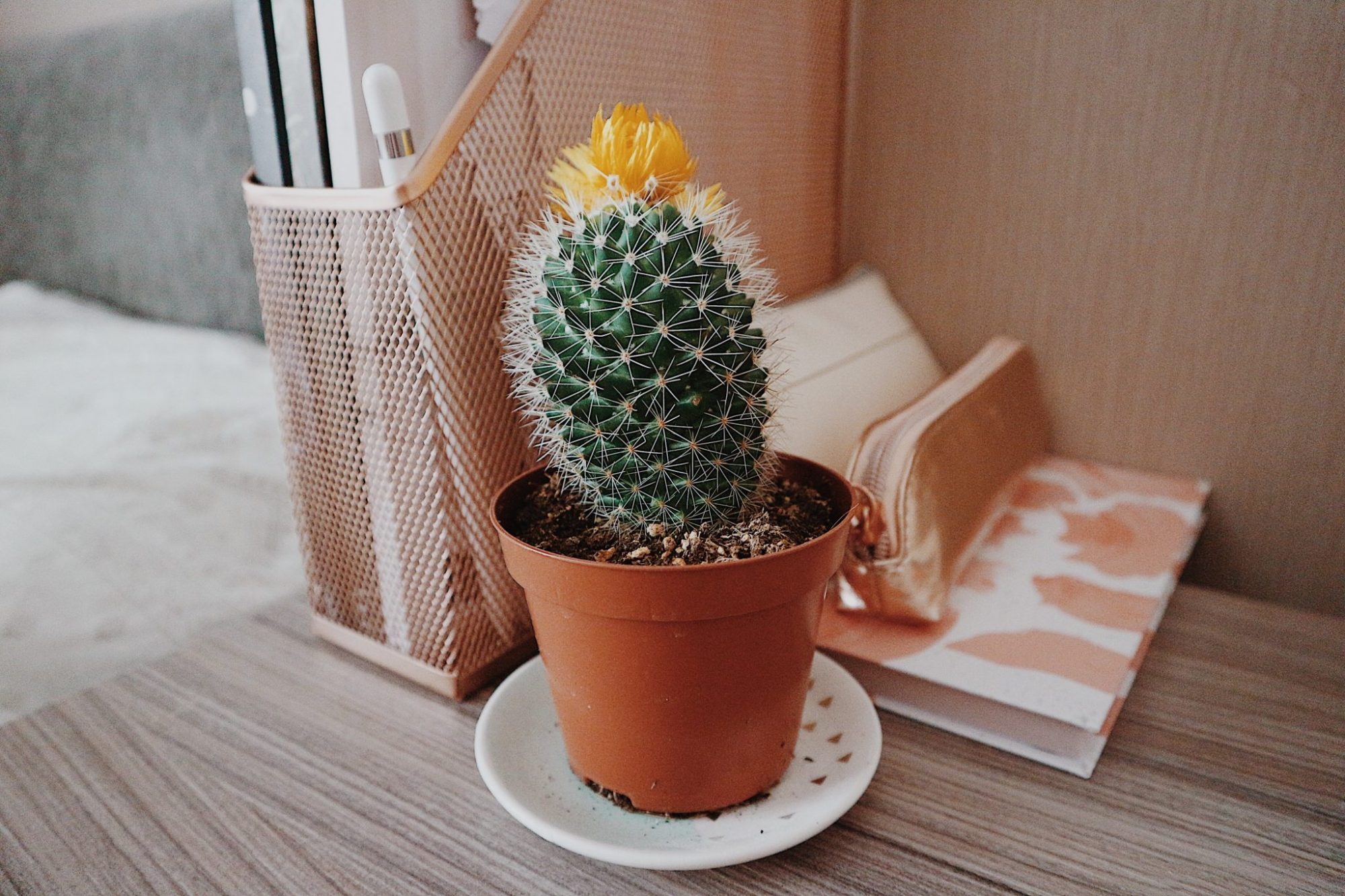 Cactus and Stationery
