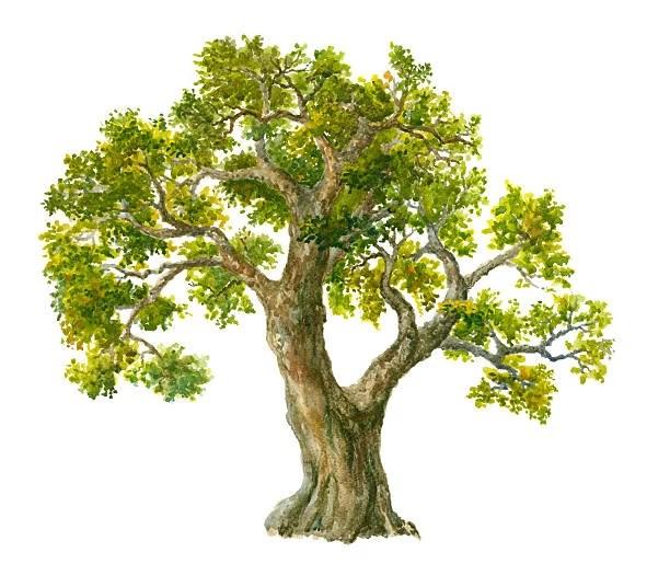 Tes psikotes gambar pohon