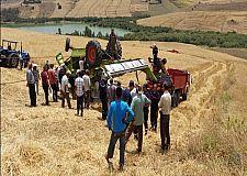 وفاة فلاح وإصابة شخصين آخرين بجروح متفاوتة الخطورة في حادث انقلاب الة حصاد