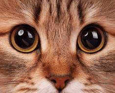 Formes des pupilles du chat : découvrez leur signification !