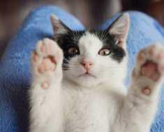 Mon chat me suit partout : 5 raisons qui expliquent pourquoi