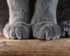 6 choses étonnantes à savoir sur les pattes de votre chat