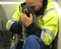 Le camionneur éclate en sanglots lorsqu'il retrouve son chat après des mois de recherches
