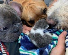 Ces trois chiens décident d'adopter et d'aider un chaton à grandir et à s'épanouir