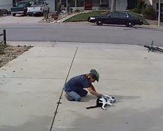 Ce chat rejeté à cause de sa différence a trouvé un ami qui aime lui rendre visite régulièrement