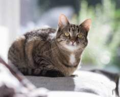 Votre chat se couche souvent dans cette position ? Voici ce que ça signifie !