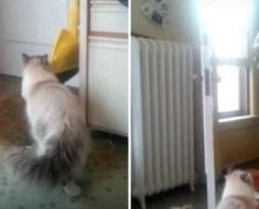 Ce soldat rentre après sa mission, regardez la réaction du chat quand il ouvre la porte