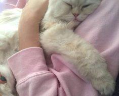 Quittez votre boulot et devenez câlineur professionnel pour chats