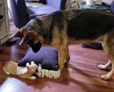 Elle retient son souffle lorsque son chien s'approche du nouveau membre de la famille