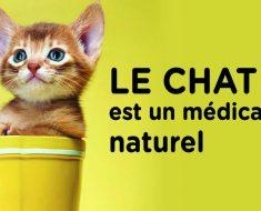 Le chat est un médicament naturel qui réduit l'anxiété et le stress, baisse le risque de maladies cardiaques et les AVC et bien plus encore