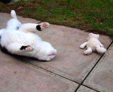 Cette petite chatte a une adorable manie quand elle part en balade