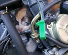 Sauvetage d'un chaton coincé dans un scooter, la raison va vous CHOQUER!