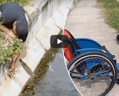 Cet homme descend de son fauteuil roulant pour sauver un chaton pris au piège