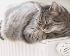 Comment savoir si votre chat a froid : 3 signes à observer