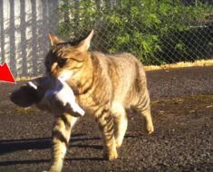 Un policier découvre avec stupeur ce que son chat cleptomane lui a ramené dans un sac